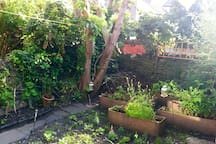 The back garden;  an oasis in the city.