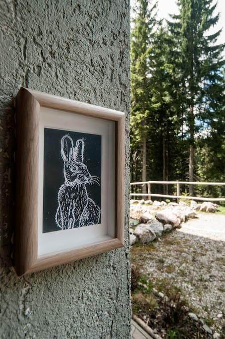 Rabbit from Pokljuka forests