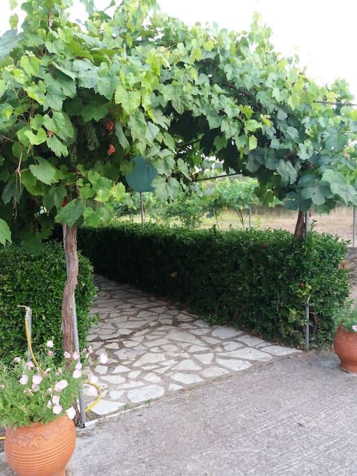 Getting  ready to cross the grape pergola