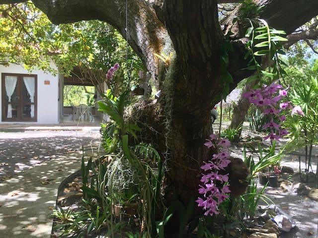 Orquídeas são nossa paixão. Melhor época para apreciar é entre maio e agosto
