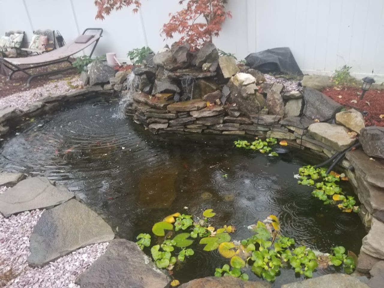 Sit and relax by our lovely Koi pond.  This pond features about 20 fish of many colors