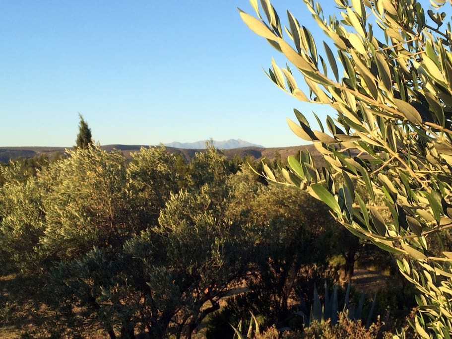 From the house, the view of Canigou Mountain (2,784 m).
