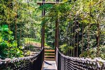 Rope bridge at Anne Springs Close Greenway