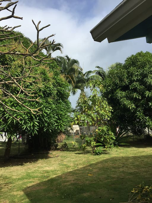 Guest bedroom backyard with mango trees