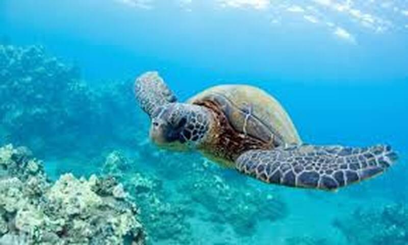 bungalow tortue de mer