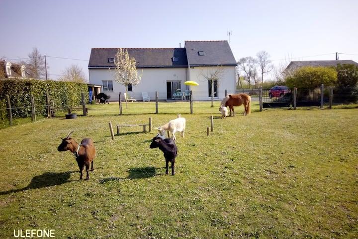 Gite Vallée de la Loire proche de Saumur et Angers