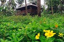 RAHUT - Tree House