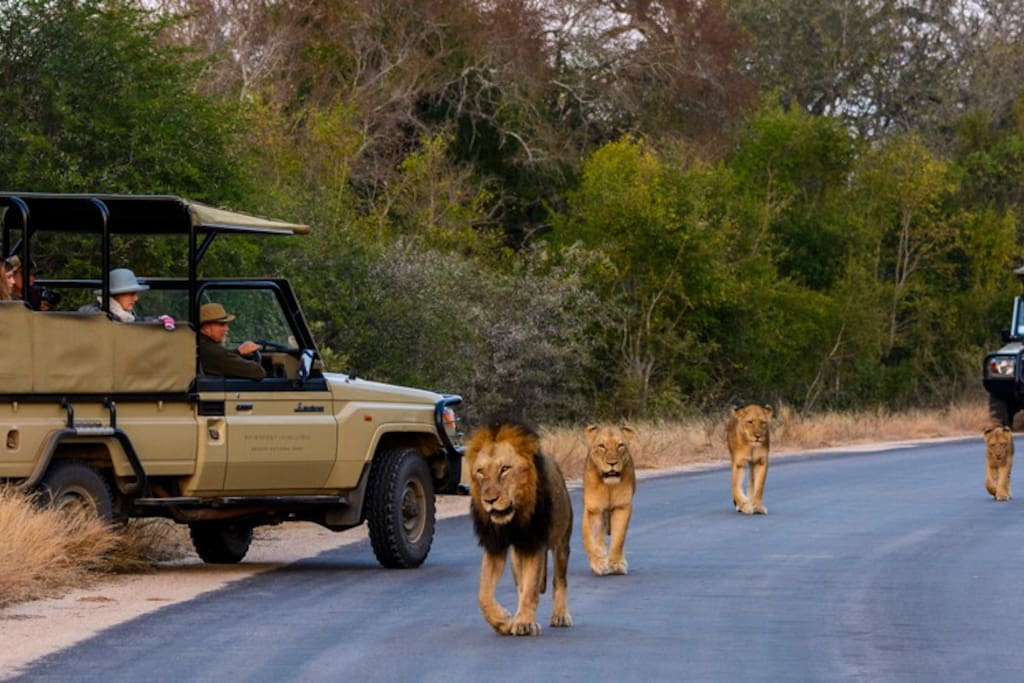Game drives in Kruger Park
