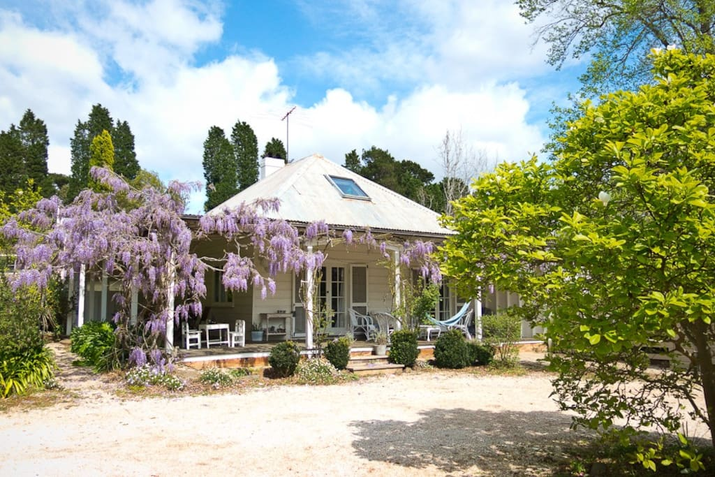 The front veranda with wisteria in bloom in Spring