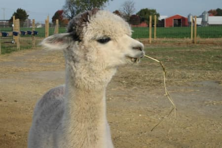 Alpaca Farm Guest Room just minutes to beaches! - House