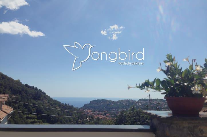 B&B SONGBIRD