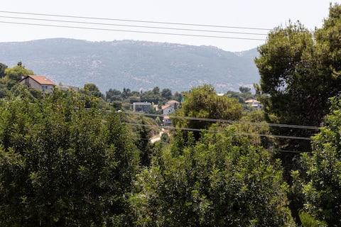 Sisso no norte verde do vale tivon de Israel