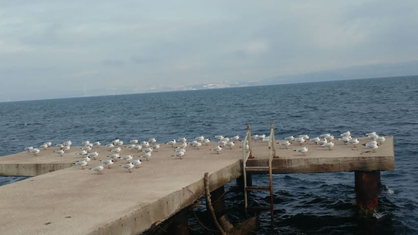 Deniz ve Doğa Manzaralı, huzurlu bir ortam.