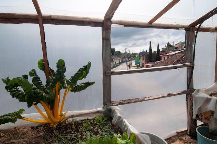 The Cuxtitali Garden