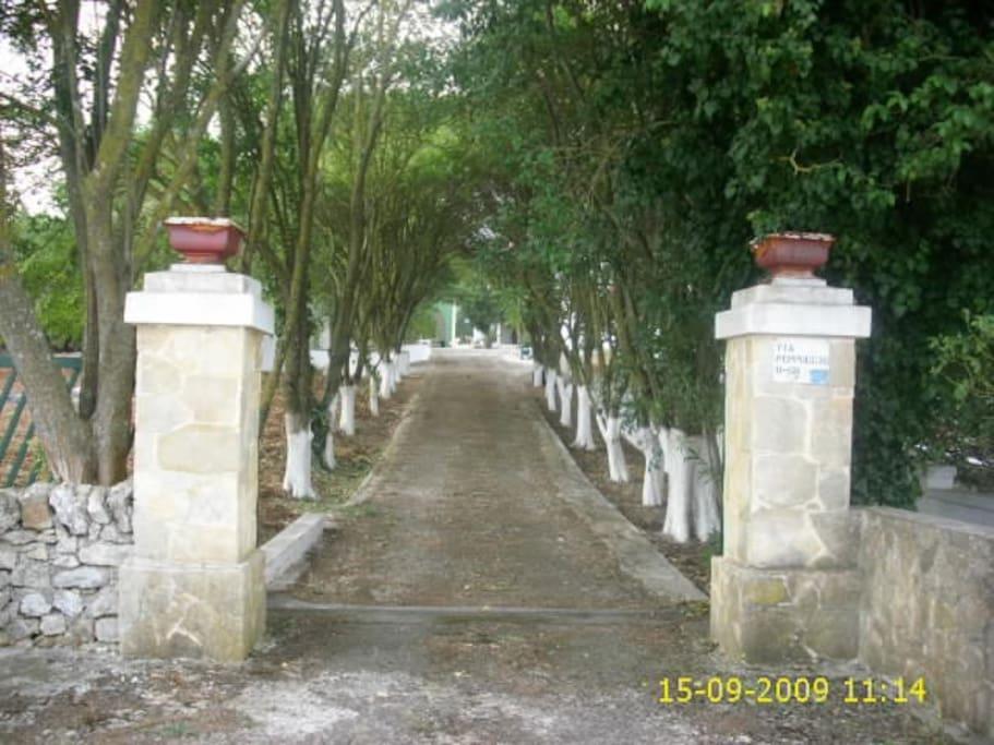 ingresso viale che conduce alla casa e al trullo