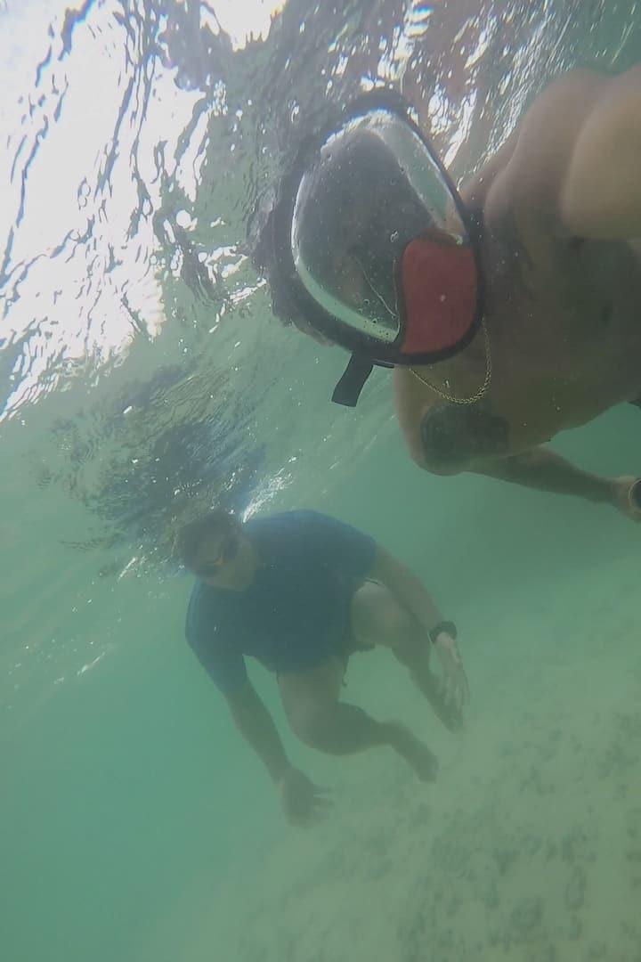 Reef diving/ snorkeling