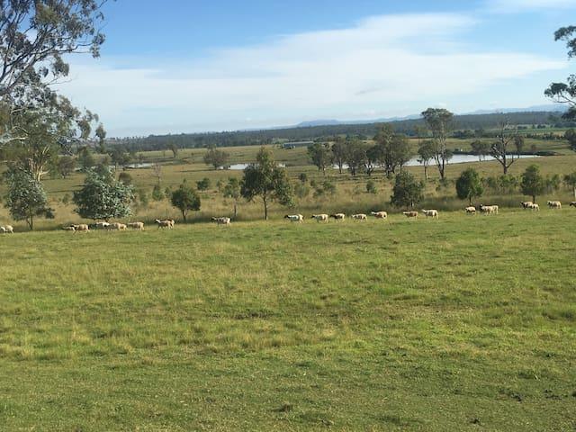 Take a morning walk around the farm