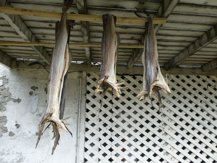 Stockfish under the veranda