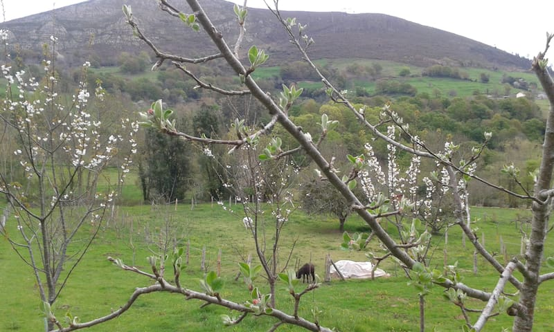 Vista desde el paseo de los cerezos