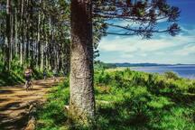 Vélo à travers les pins