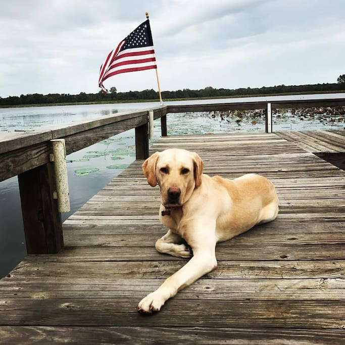 Dock Life (and our adorable lab, Cope)