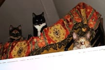 Tukke and Ingeborg on the futon, first floor. The cats of the house