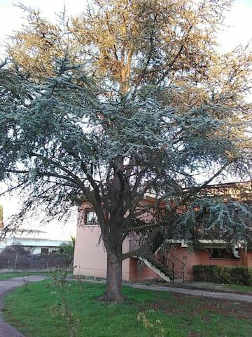 Casa del Abuelo Candido - San Lorenzo