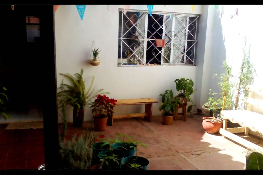 Mi hermoso patio!