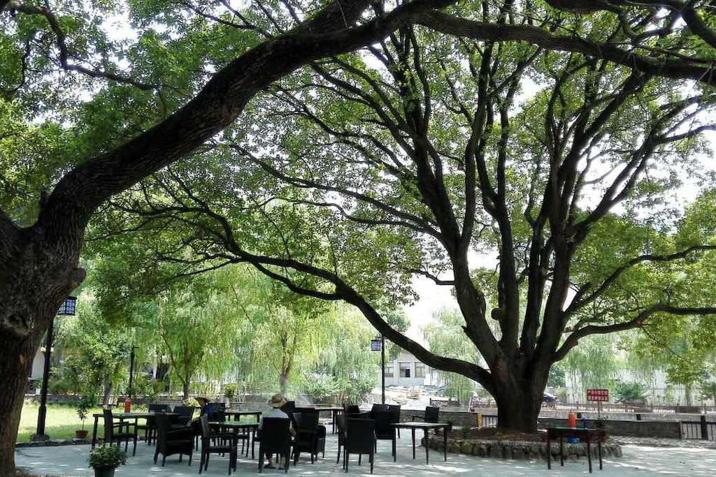院子里的大树,喝茶聊天,时间很快