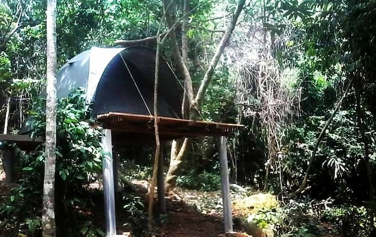 RainForest Camping at Perhentian Island Tent 2