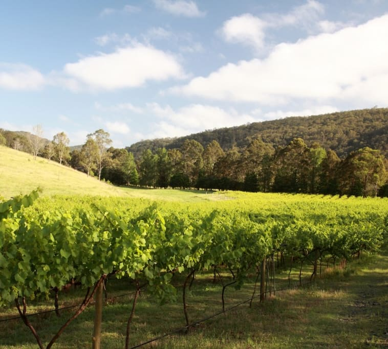 Explore the property - the vineyards, paddocks, creeks and hillsides