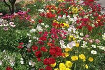 Beautiful flowers on the promenade of Natania