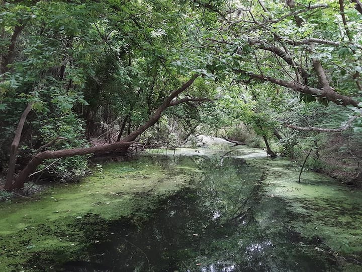 The unique features of the riparian zone