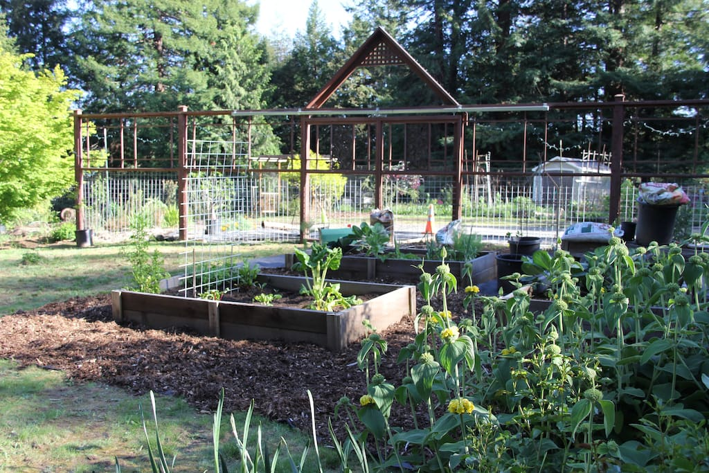 Vegetable garden area