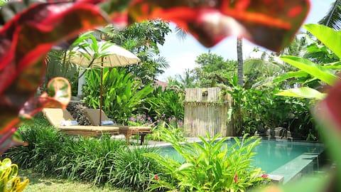 A little section from our large and luscious tropical private garden