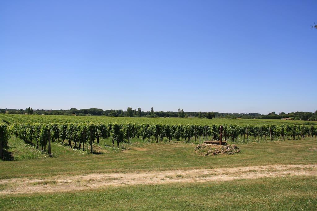 Vu sur les vignes