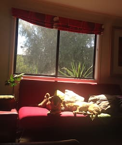 Cosy home with friendly pups - Shepparton