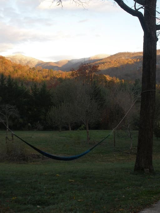 hammock in front yard