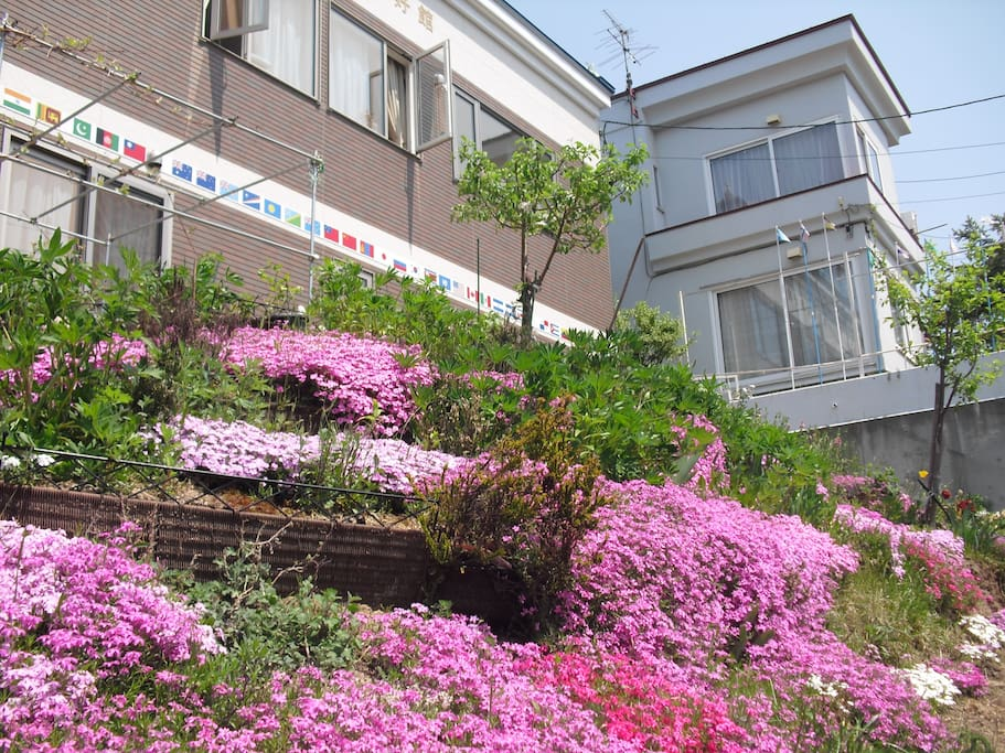 In May this year I took a photo of my HOUSE (right side) and a NEW HOUSE (left), and am myself surprised at its beauty. Your room N.21 is in the NWE HOUSE.