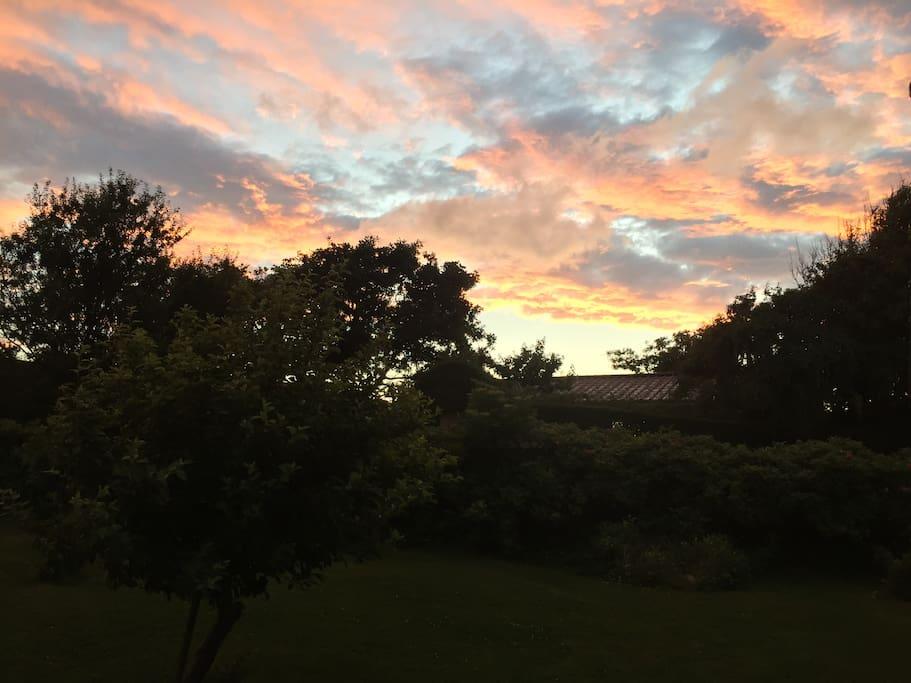 Evening sky seen from the garden.