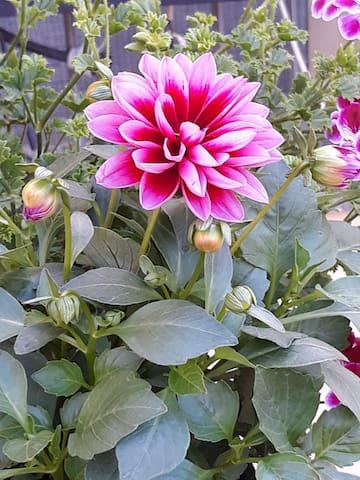 Flowery House