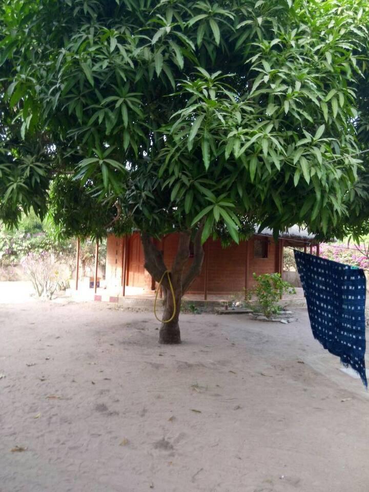 Maison avec case et grand jardin plein de manguier