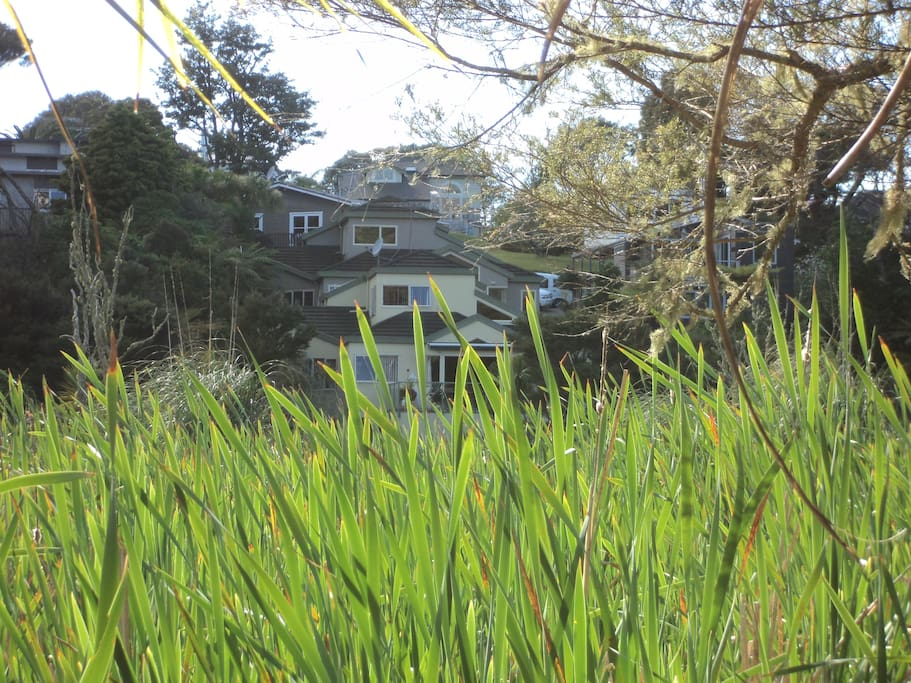 View of house from the other side of the reserve