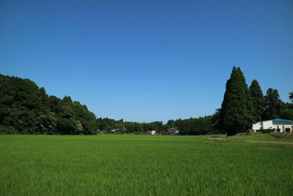 山庄后的森林田园景色