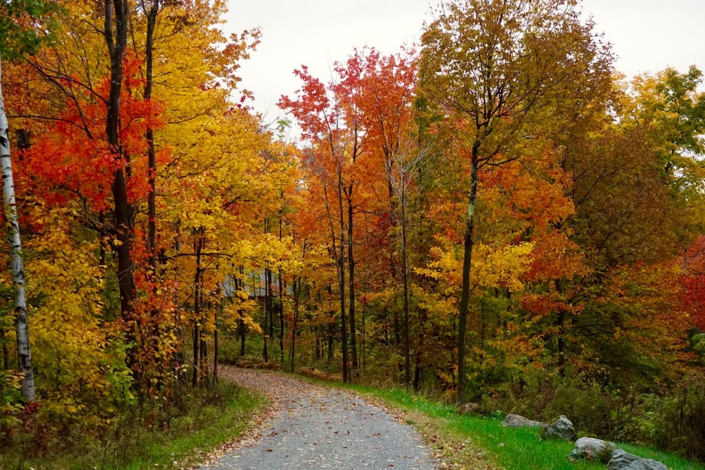Fall foliage 2015, our driveway, complements of Ray, a guest.