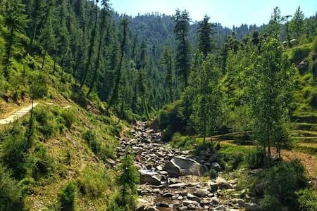 Paradise in Himalayan Forest