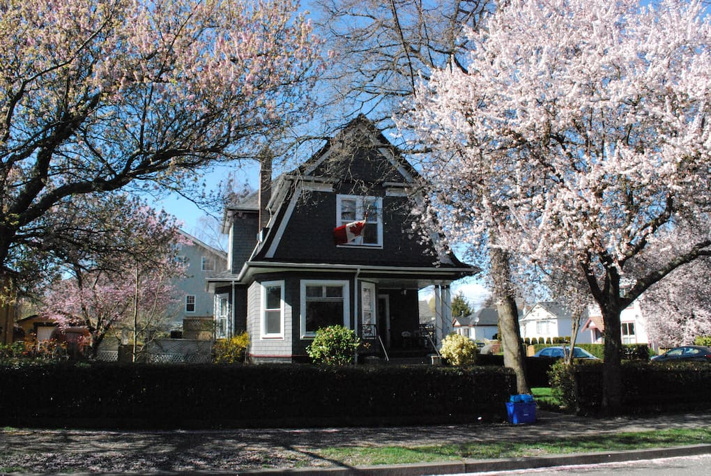 The 1905 Victoria house during the beauty of Spring.