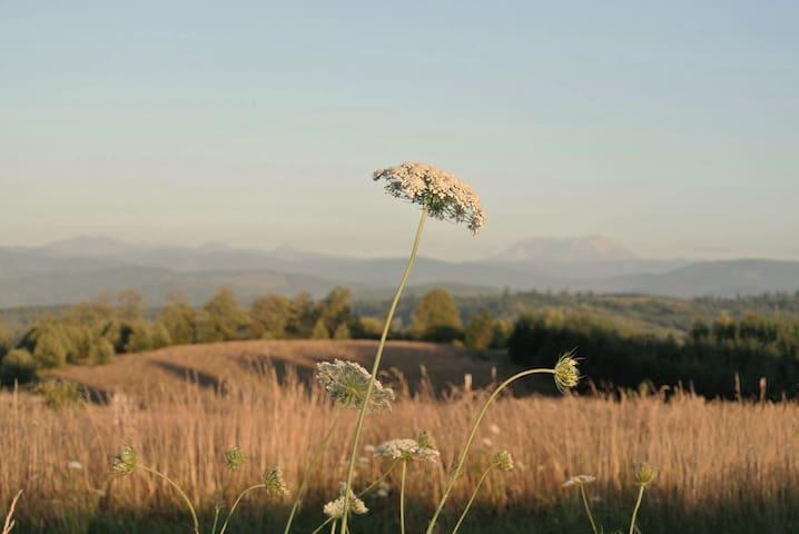 Jezreel Farm