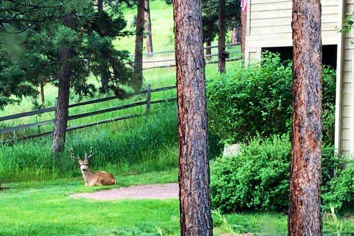 Elk Meadow Get Away!