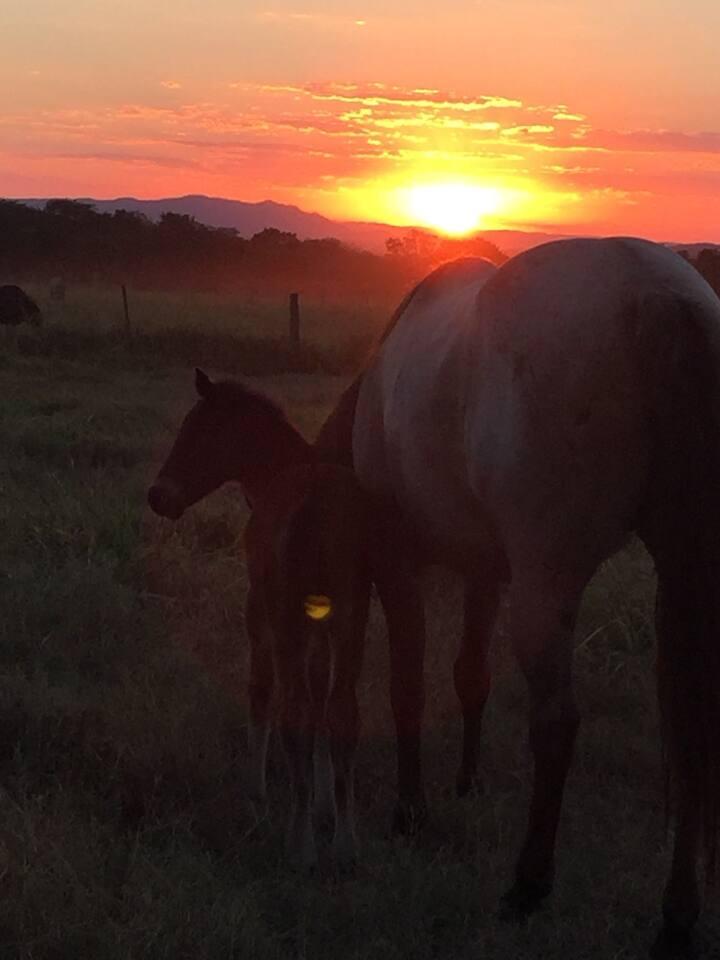 A tranquilidade e o ar puro de uma bela fazenda